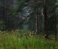(via 35PHOTO - Дмитрий Алексеев - На опушке)