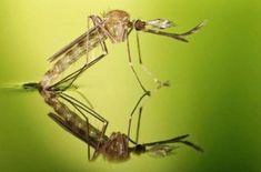 Jak uniknąć ukąszeń komarów