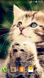 Cute Cats Live Wallpaper