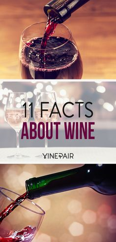 11 facts everyone should know about wine!
