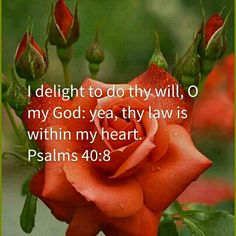 I delight to do thy will, O my God: yea, thy law is within my heart. Psalms 40:8 KJV