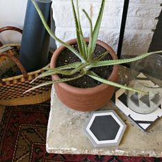 Hello plant baby. Loving this little vignette in betsy & iya founders' home tour on Apartment Theray.