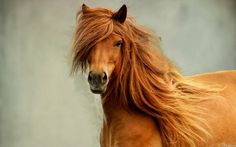 beautiful-amazing-brown-mare-horse