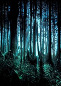 GladsBuy Spooky Forest x Computer Printed Photography Backdrop Nature Theme Background Forest Wallpaper, Dark Wallpaper, Wallpaper Backgrounds, Creepy Backgrounds, Wallpaper Designs, Tree Wallpaper, Halloween Backgrounds, Wallpaper Wallpapers, Computer Wallpaper