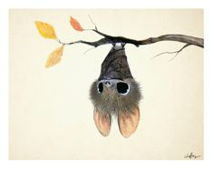 Those eyes o.o art cute animal illustration, art, october art. Art And Illustration, Illustration Mignonne, Cute Animal Illustration, Animal Illustrations, Illustrations Posters, October Art, Art Mignon, Cute Bat, Cute Drawings
