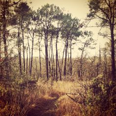 A favourite spot.... woodland walks, South West France