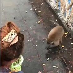 Funny Animal Videos, Cute Funny Animals, Animal Memes, Funny Cute, Cute Little Animals, Animal Pictures, Funny Pictures, Amazing Gifs, Funny Video Memes