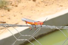 Such colourful Bugs in Africa