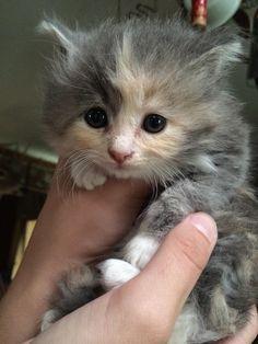 Meet Lucy!