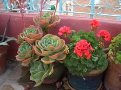 Flower pots on the rooftop terrace of Casa Esquina, Alhama de Granada