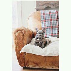 That chair!!! Love, love, love xx