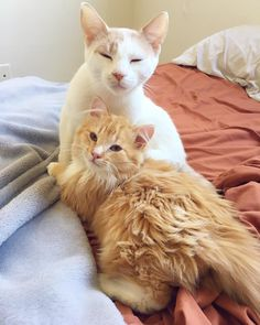 Brosnan was a frightened little feral who refused to let anyone near him until he met a feline friend at his foster home.He began to learn to love. Sleepover at O's @sleepover_at_osSix months ago, Friends for Life Rescue Network, a local rescue group in Los Angeles, was alerted abou...