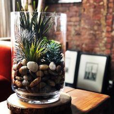 Succulent Wall, Succulent Arrangements, Succulent Terrarium, Hurricane Vase, Hurricane Candle Holders, Vases Decor, Plant Decor, Crate And Barrel, Large Glass Vase