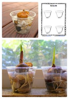 Free Science Worksheet for Observing Plant Growth with Kids