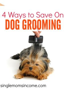 If you're not careful the cost of grooming can be hundreds or even thousands of dollars per year! Here are four smart ways to save on dog grooming. There's something for everyone on this list! http://singlemomsincome.com/4-ways-save-dog-grooming/