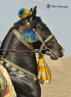 Pretty horse in cool costume.