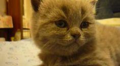 【動画】パタリ…と、急に眠りに落ちてしまう子猫 http://skaihahiroi.blog.fc2.com/blog-entry-1532.html…