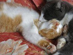 KiKI  クルミーとお昼寝