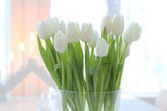 Imagen de flowers, tulips, and white Bridal Flowers, My Flower, Fresh Flowers, Flower Power, Beautiful Flowers, Wedding Tulips, Summer Flowers, Beautiful Things, White Tulips