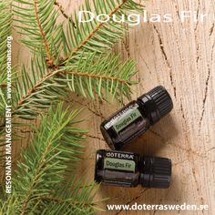 DOUGLAS FIR ESSENTIAL OILS / DOUGLAS FIR ETERISK OLJA
