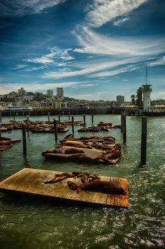 Sea lions at Pier 39, San Francisco. I've been here!!