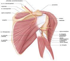 Stretching spalla schede - Cerca con Google