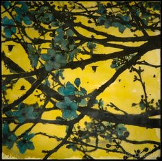 Jeff League - Plum blossoms on branch with crows in yellow sky photo transfer over encaustic painting.