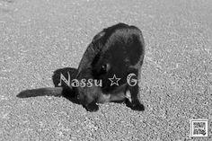 http://nassugallery.saleshop.jp/  #photo #japan #写真