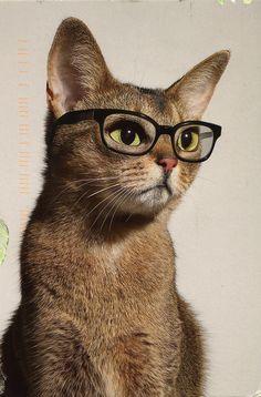 studious kitty
