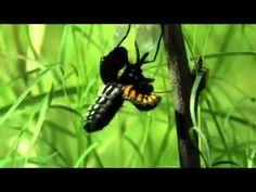"""Lindo vídeo para reflexão,ao som da música """"noite traiçoeira"""" harpa cristã instrumental - YouTube"""
