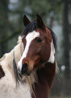 This looks like my first horse Cheyenne-the best first horse a girl could have-got him when I was 11 years old