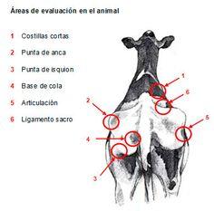 Manual de manejo y de alimentación de vacunos II: Manejo y Alimentación de vacas productoras de leche en sistemas intensivos - Engormix