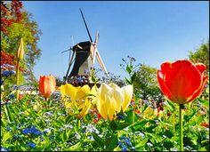 Best well-known Tulip Garden in Netherlands