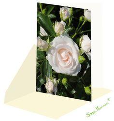 Die Rosenkarte ist ohne Text und eignet sich zu verschienden Anlässen. Flowers, Plants, Florals, Planters, Flower, Blossoms, Plant, Planting