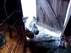 """MUST WATCH! Reading her book """"One Woman Farm"""" and feeling very inspire by this video.  She has a name for what I have """"barnheart"""", she calls it...when you long for a farm of  your own but aren't able to make it happen just yet."""