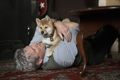 Film Le, Hachiko, Richard Gere, Dogs, Animals, Ugly Faces, True Friends, Animales, Animaux