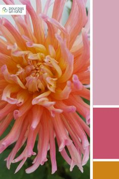 Palette mauve, rose, gris et or. Découvre des conseils pour créer la palette de couleurs de ta marque pas à pas. Rose Gris, Color Combos, Zen, Inspiration, Plants, Color Combinations, Advice, Biblical Inspiration, Planters