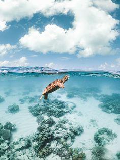 Sea turtle that pays for air - Sea turtle that pays for air . - Sea turtle that pays for air – Sea turtle that pays for air – - Baby Sea Turtles, Cute Turtles, Australia Pictures, Cairns Australia, Australia Winter, Australia Beach, Coast Australia, South Australia, Western Australia