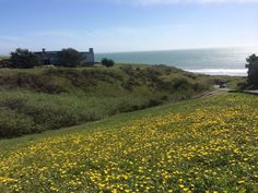 At Bodega Bay, March 10, 2014.