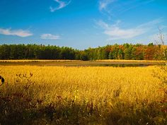 Harvest Marsh by JP McKim