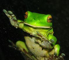 https://flic.kr/p/buNPJ4 | Green Frog