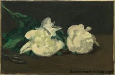 Edouard Manet Branch Of White Peonies With Pruning Shears oil painting for sale; Select your favorite Edouard Manet Branch Of White Peonies With Pruning Shears painting on canvas or frame at discount price. Edouard Manet Paintings, Monet Paintings, Floral Paintings, Canvas Paintings, Camille Pissarro, Oil Canvas, Canvas Art, Paul Cézanne, White Peonies