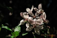 Kwitnące wiosną drzewa owocowe | Blog-Foto.pl