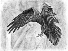 raven drawing - Google'da Ara