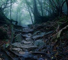 """Mystical path, -*Perhaps another picture of the """"ANCIENT-PATH-TO-THE-ELDER'S*.. ☆☆-would you walk it,.. ? ? ? -☆☆"""
