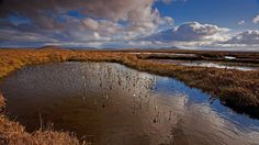 Peat-free gardening - The large-scale removal of peat from bogs in Britain and Ireland is destroying one of our most precious wildlife habitats. It takes centuries for a peat bog to form, with its special wildlife - modern machinery destroys it in days.