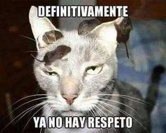 Resultado de imagen de memes de gatos graciosos