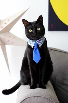 Dog Vest, Dog Shirt, Pet Station, Cat Hacks, Pet Dogs, Pets, Funny Cute Cats, Dog Clothes Patterns, Cat Accessories