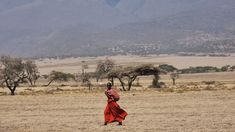 The Kenyan Maasai Who Once Hunted Lions Are Now Their Saviors