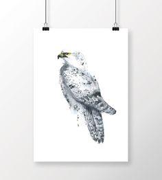 Fálki | Hrefna - Aquarelle originals and prints